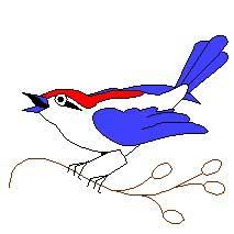 calling_bird